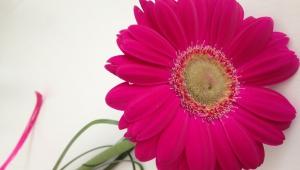 A milé překvapení, kytička od Lukáše :-) děkujeme