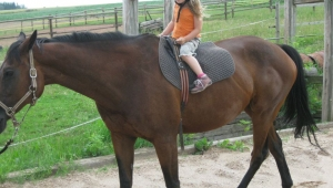 od mala v sedle a u koní, to je život a láska talentované Nikolky